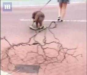 dog stick1
