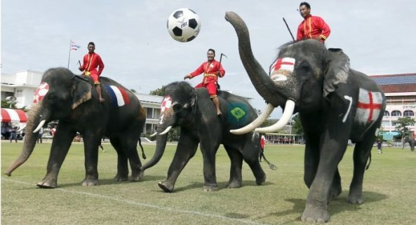 Image result for thailand elephant awareness football