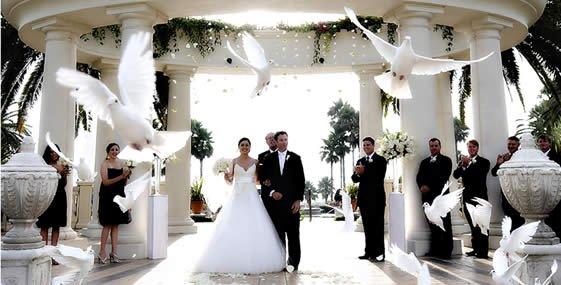 bruidsduiven1177684548.jpg