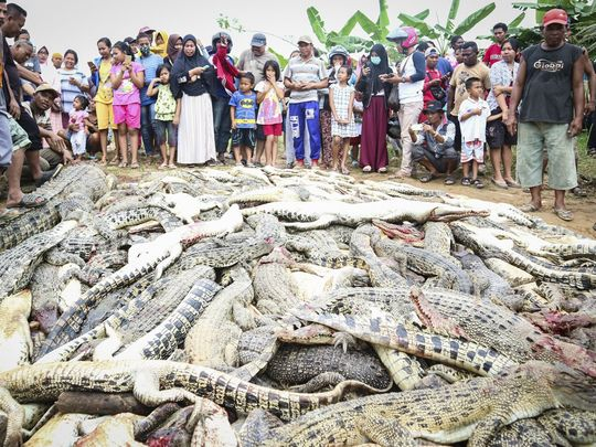 636673254680086661-CROC1EPA-INDONESIA-CRIME-CROCODILE-101530179