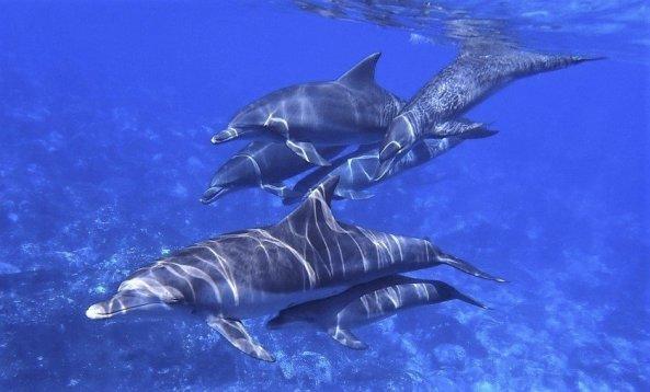 dolphin-11616755704.jpg
