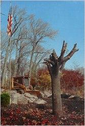 911 survivor tree november 2001