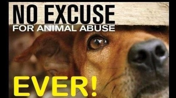 Petition: All Animal Abusers To Be Registered And Banned