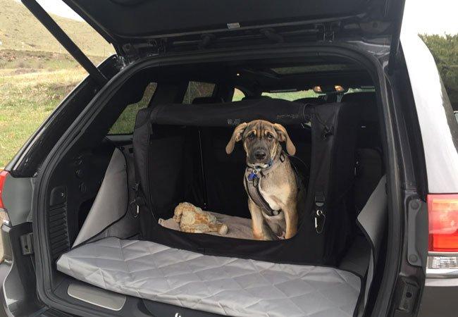 dog-in-custom-made-carrier-1418987864.jpg
