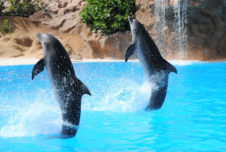 dolphin-1602874_960_720