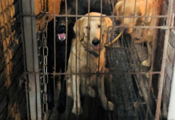 cageddog11579051909.jpg