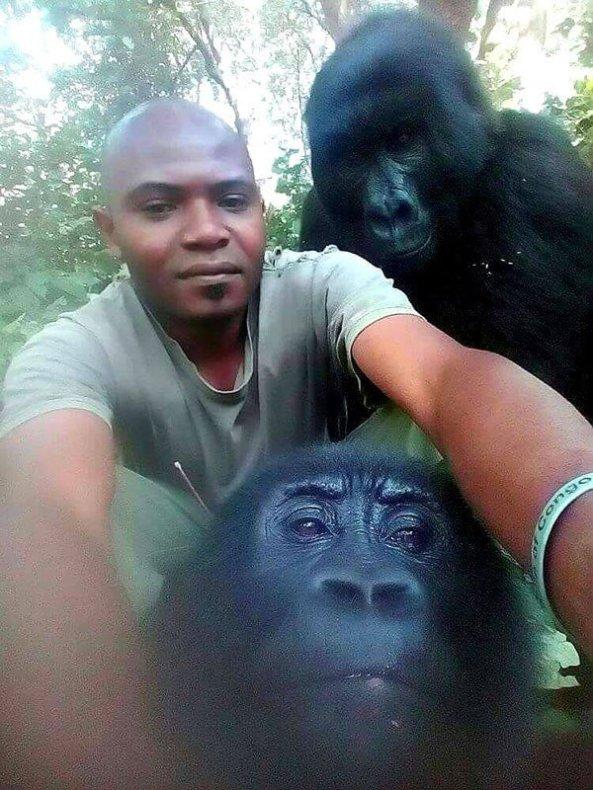 gorilla-selfie-standing-12013348094.jpg?w=593