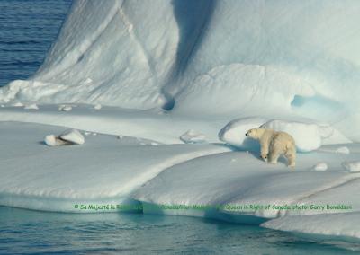 Polar bear on ice_SARA registry webpage_gov Can