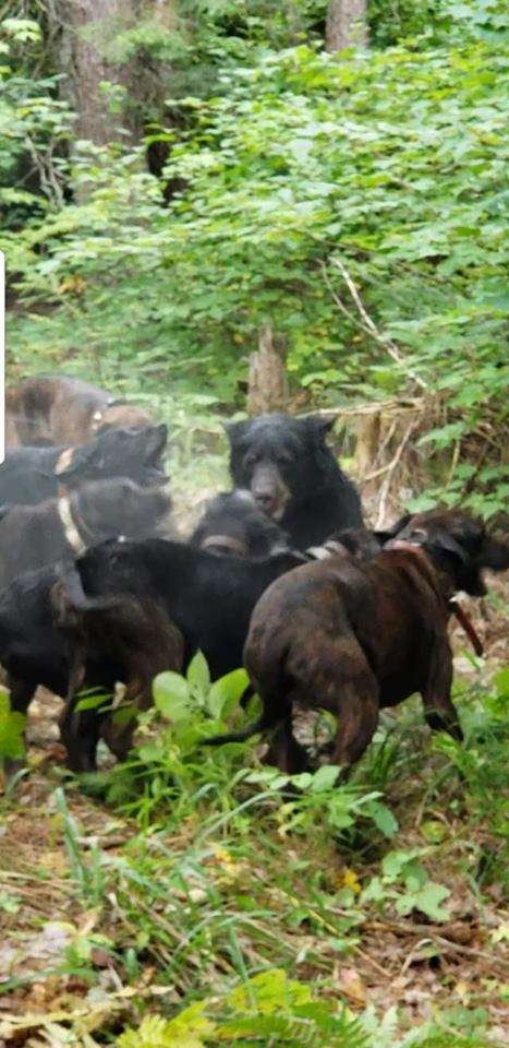 08.31.19 TK BEAR W HOUNDS