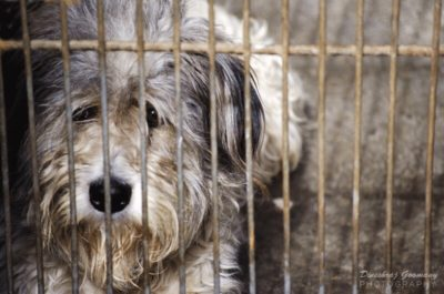 caged-dog-by-dineshraj-goomany-400x265